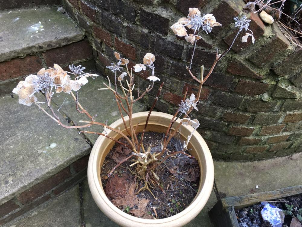 winter-garden-2017-1
