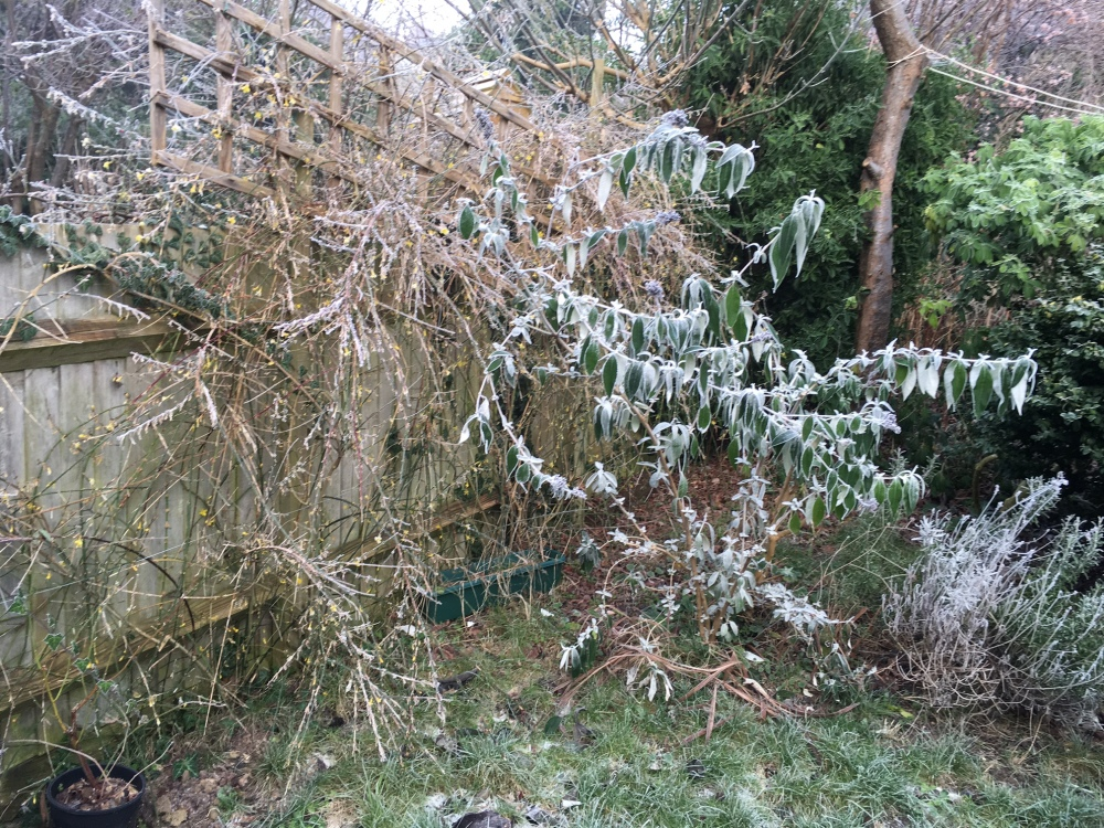 winter-garden-2017-2